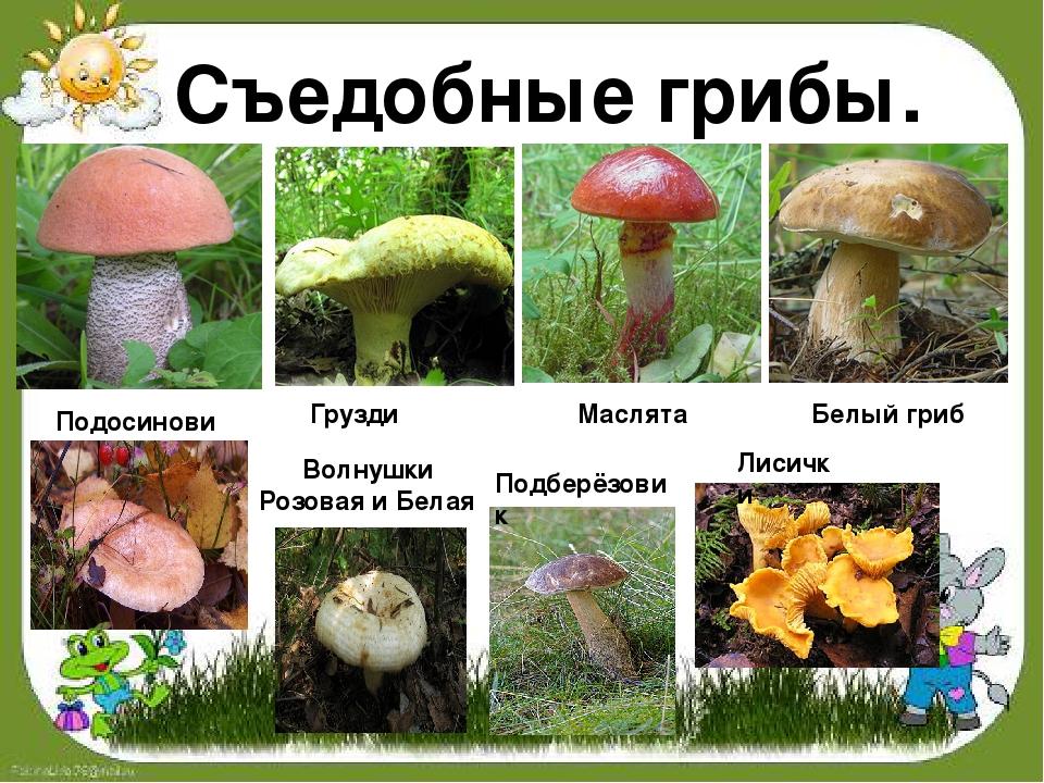 грибы с картинками фото грибов с названиями описание информация