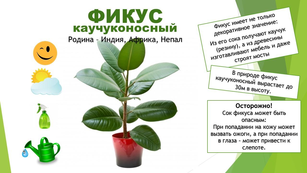 картотека комнатных растений в картинках один вид