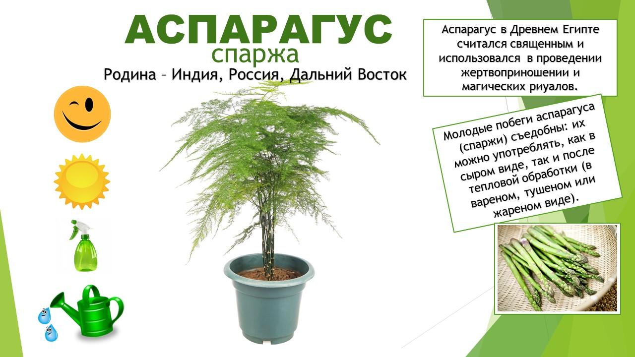 картотека комнатных растений в картинках правильнее светонакапливающая или