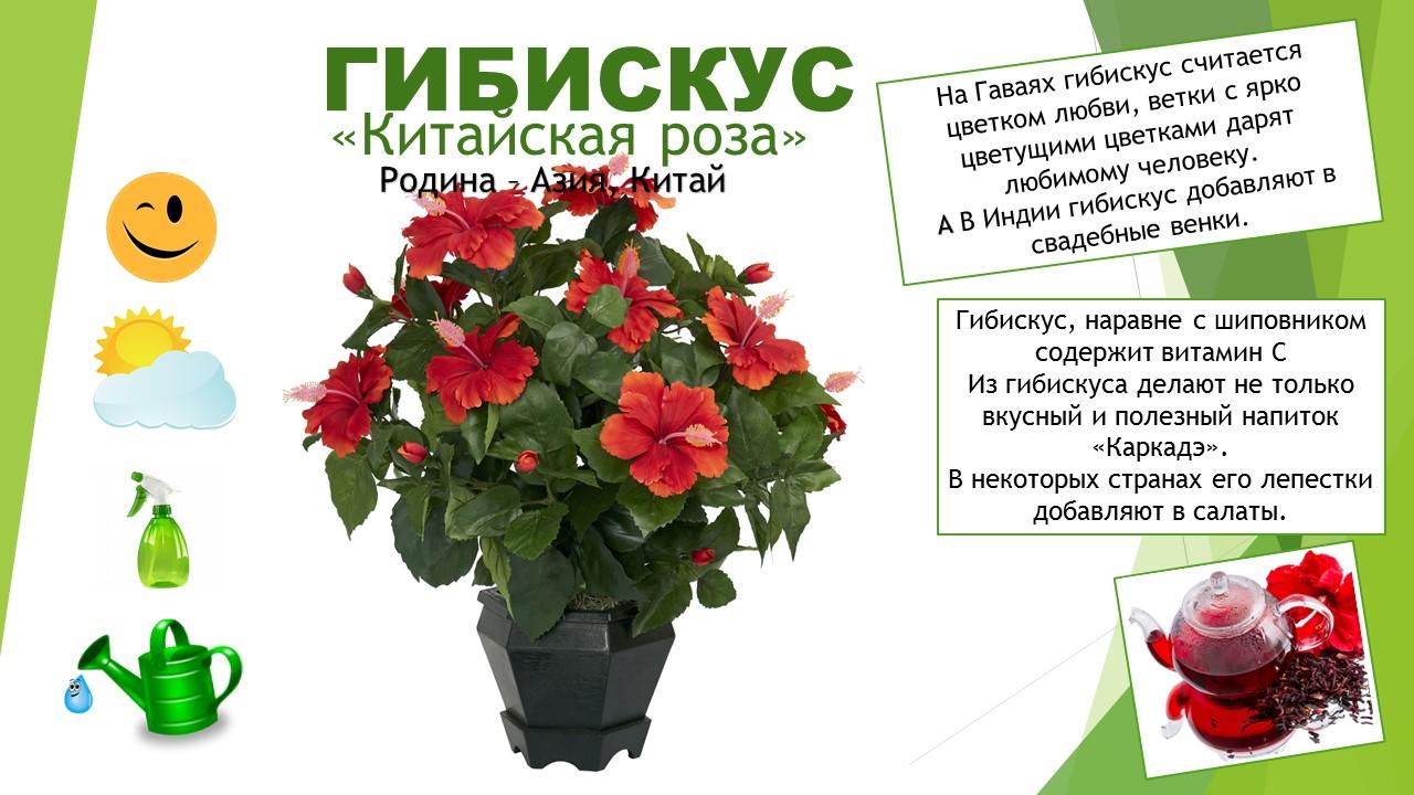 картинки комнатных цветов с названиями для подготовительной группы интернет-магазине картинки