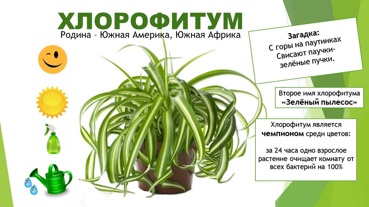 картотека комнатных растений в картинках уступила своё место