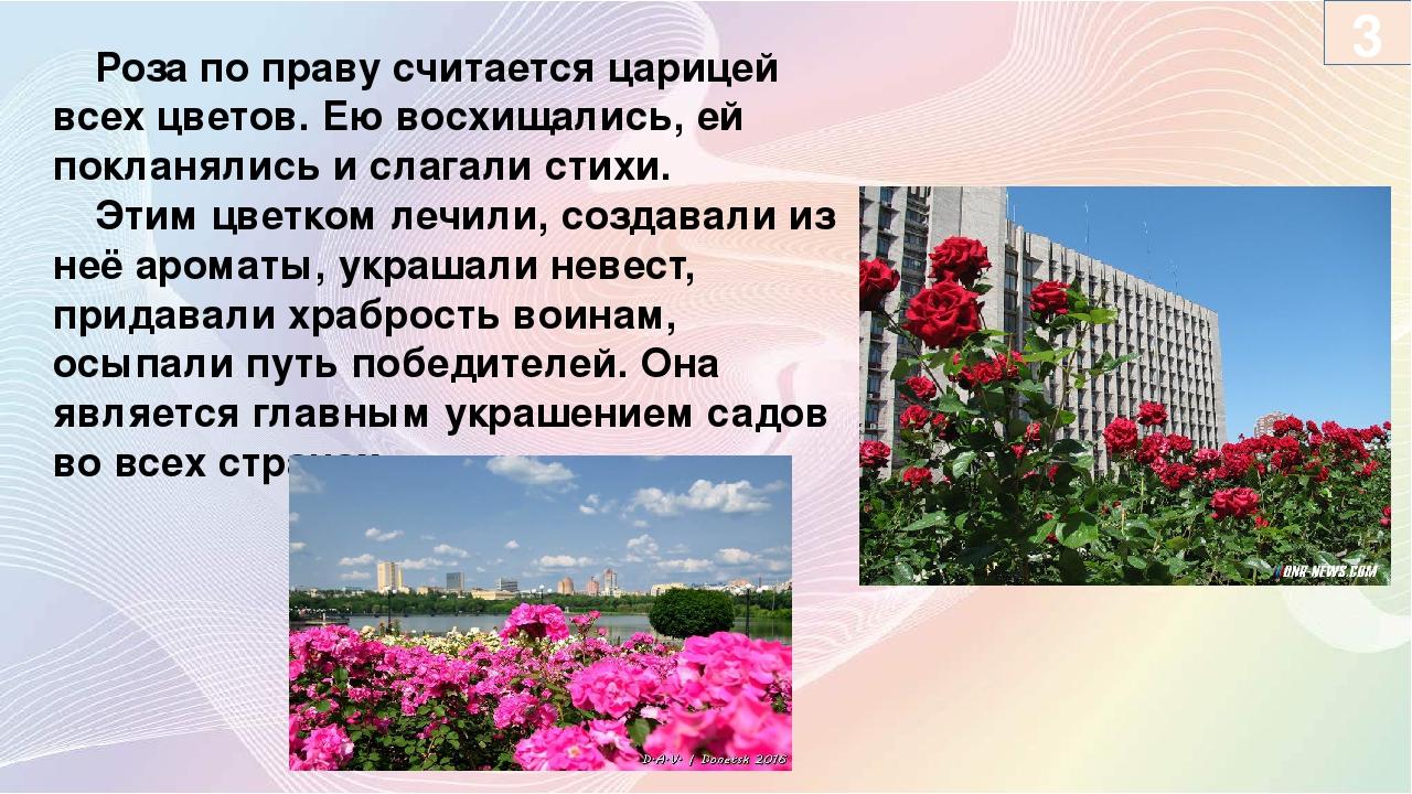 Роза по праву считается царицей всех цветов. Ею восхищались, ей покланялись...