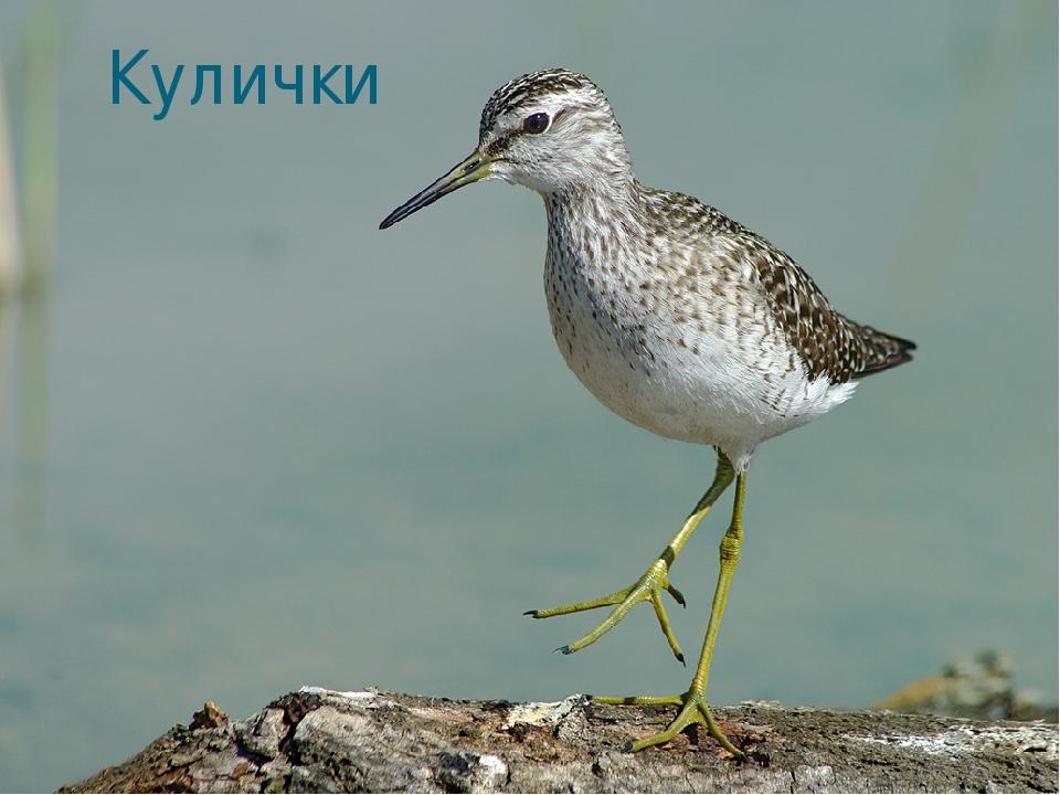 местность болотная птица кулик картинка холм