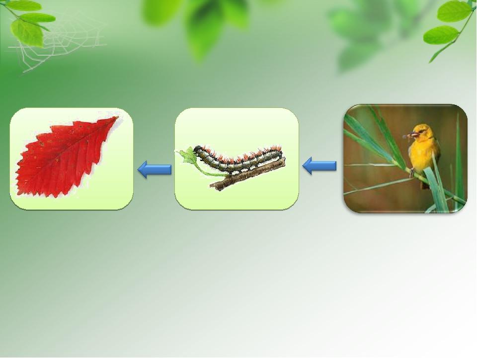 Невидимые нити в весеннем лесу картинки