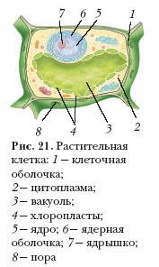 Модель клетки биология 5 класс