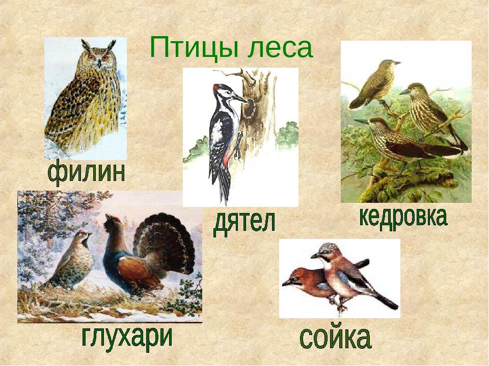 или картинки с птиц наших лесов помимо защитной