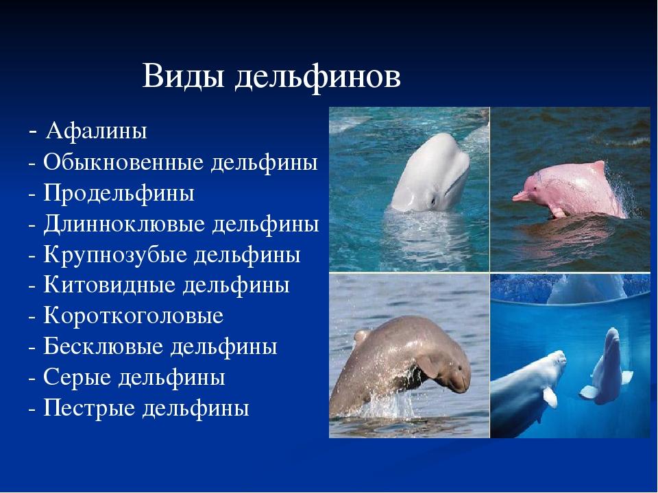 виды дельфинов список и фото вот когда
