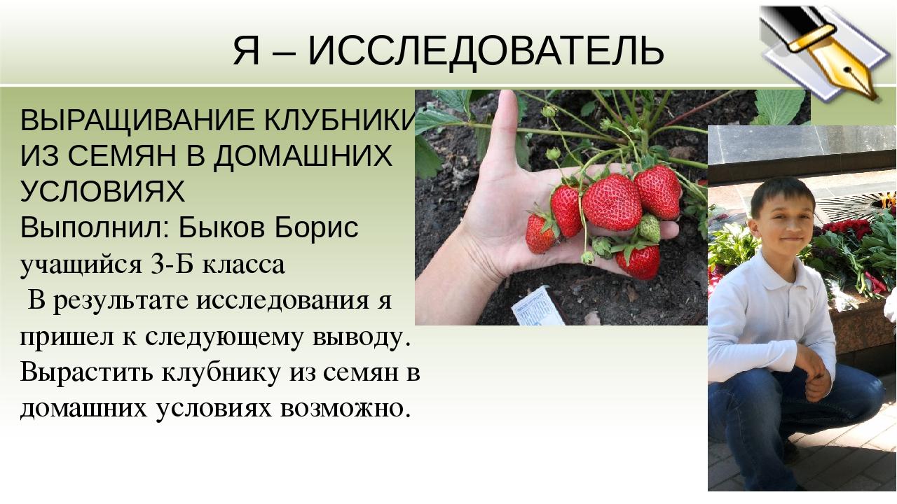 Сорта выращивания клубники в домашних условиях