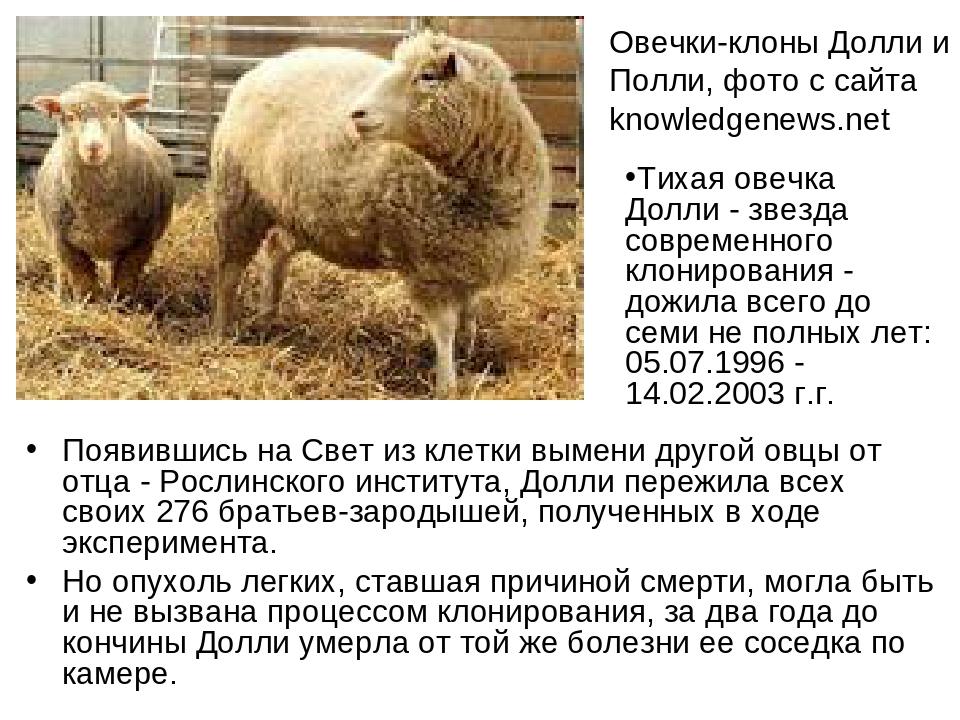 Появившись на Свет из клетки вымени другой овцы от отца - Рослинского институ...