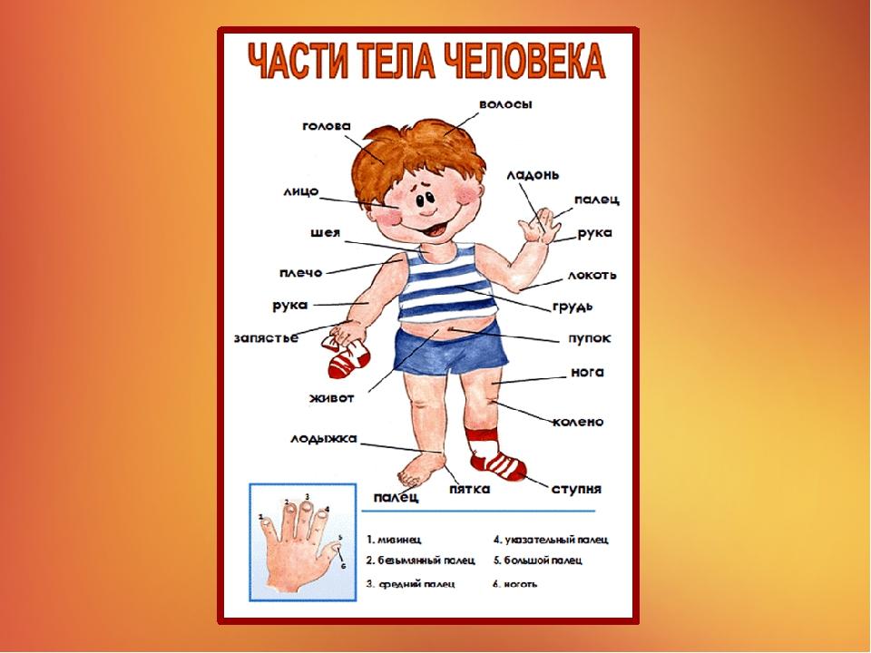 Картинка человека в полный рост для детей части тела, открытки венчание