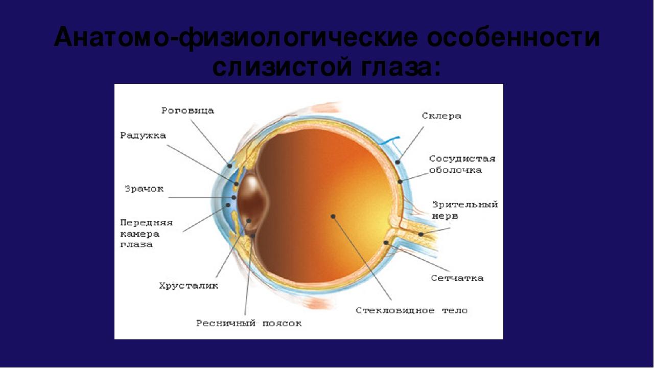 Анатомо-физиологические особенности слизистой глаза: