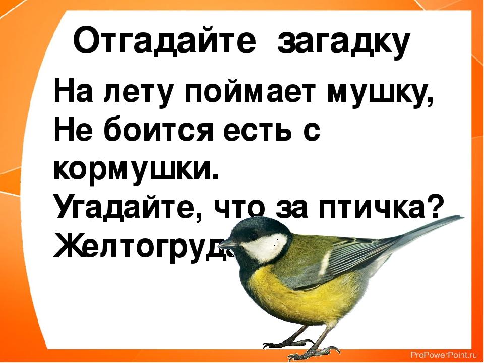 На лету поймает мушку, Не боится есть с кормушки. Угадайте, что за птичка? Же...