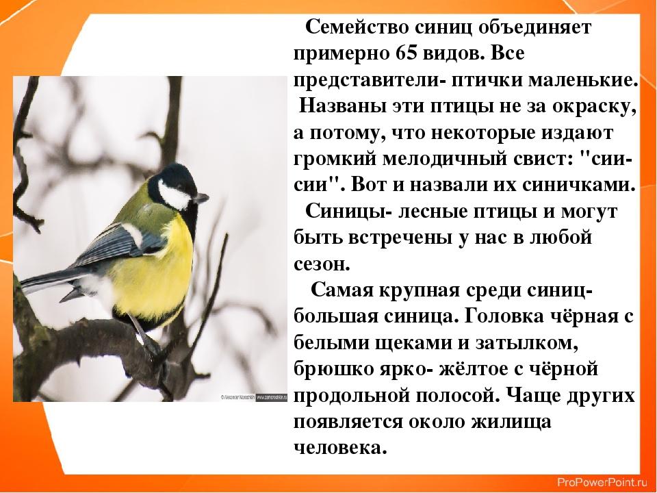 Семейство синиц объединяет примерно 65 видов. Все представители- птички мале...