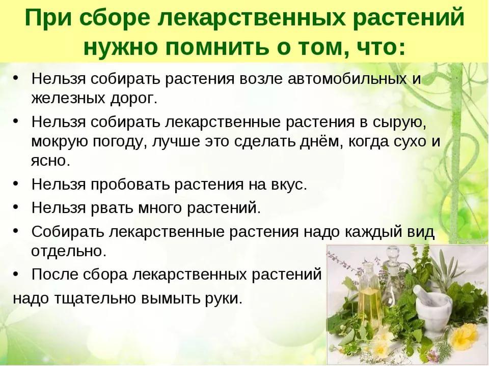 нашем растения это понятие для детей психического
