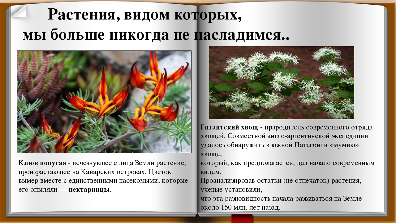 растения на грани исчезновения в россии с картинками