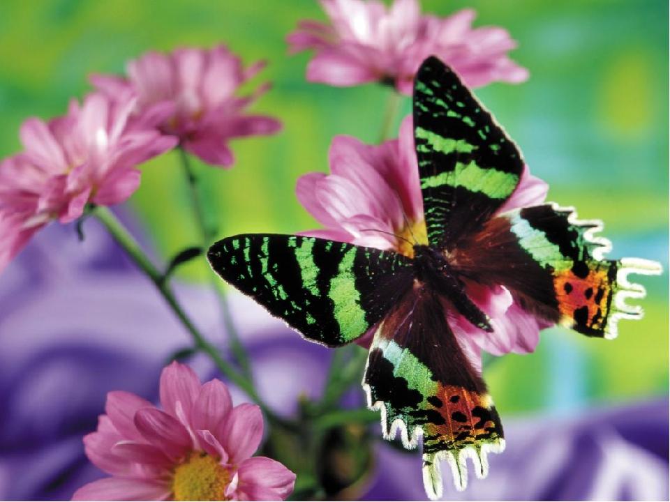 Красивые бабочки на цветах фото