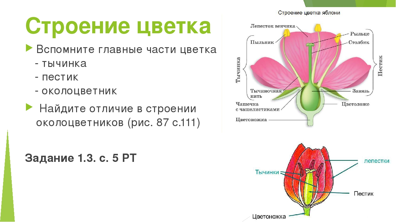 устройство цветка картинки празднике
