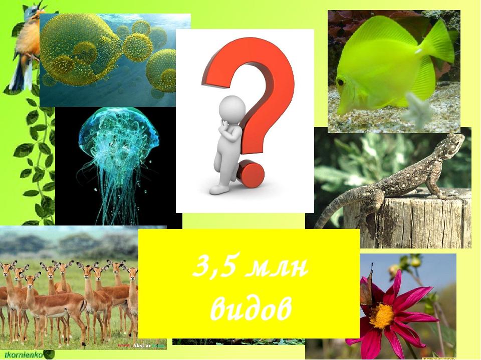 3,5 млн видов