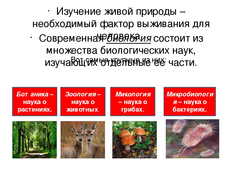 Вот самые крупные из них: Изучение живой природы – необходимый фактор выживан...