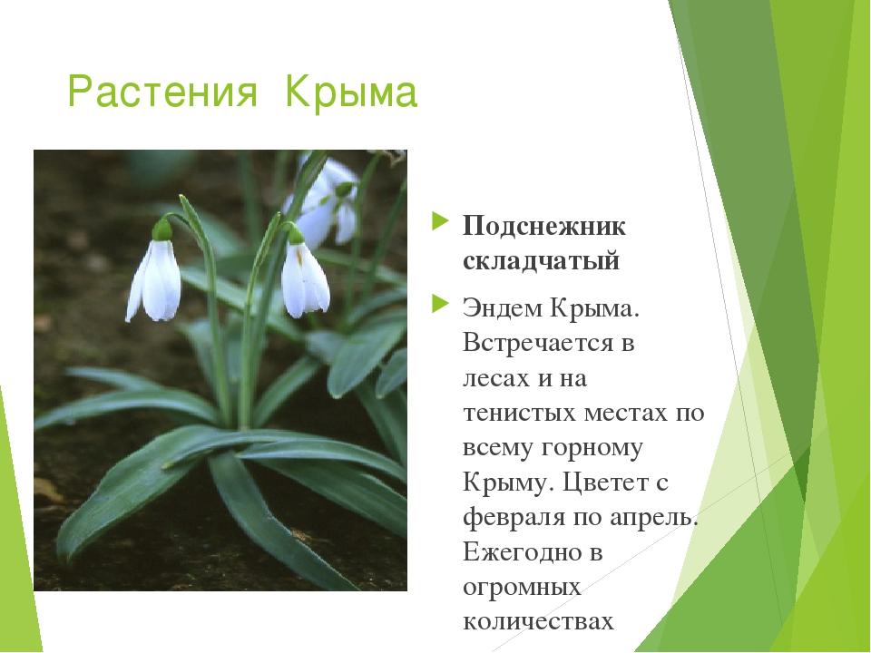 сложно растения красной книги крыма фото и описание света, проходящего