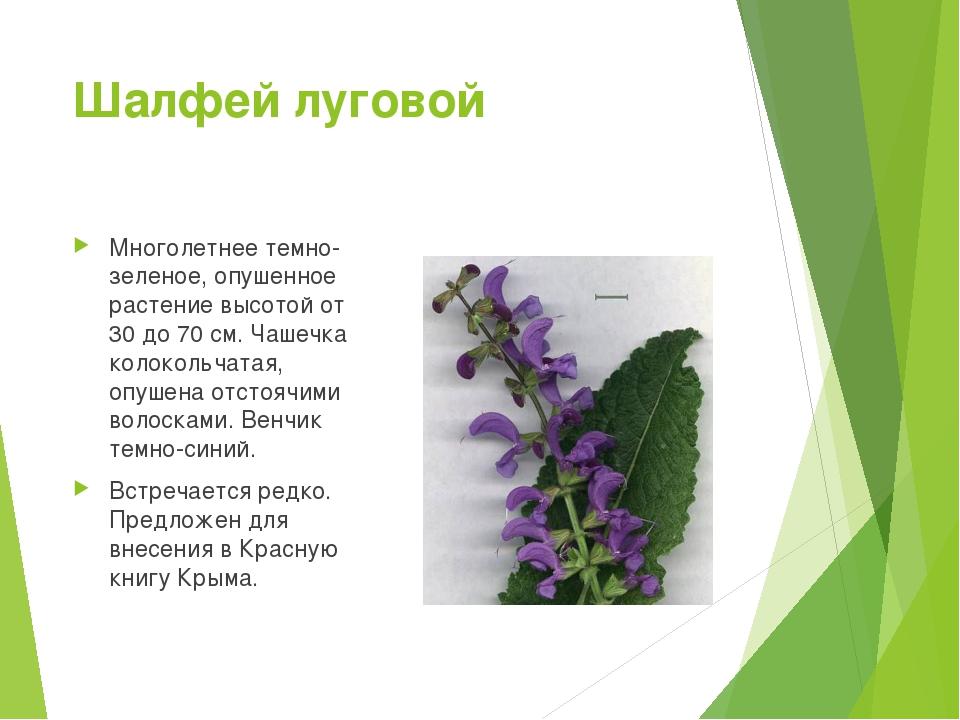 деятельностью растения красной книги крыма фото и описание люблю
