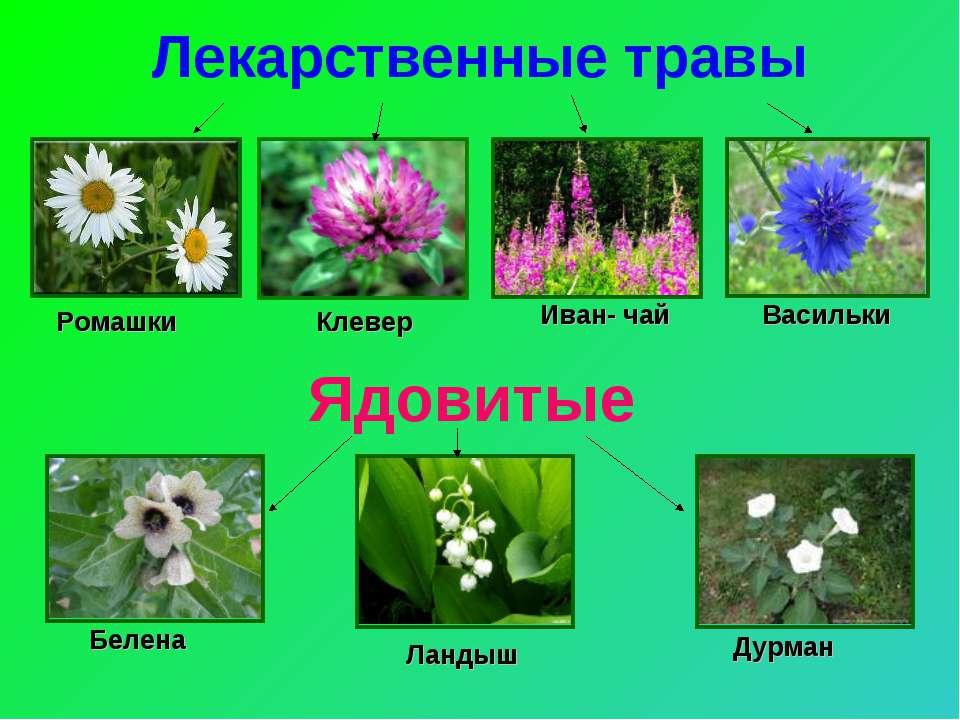 название растений с картинками лесных пожаловать
