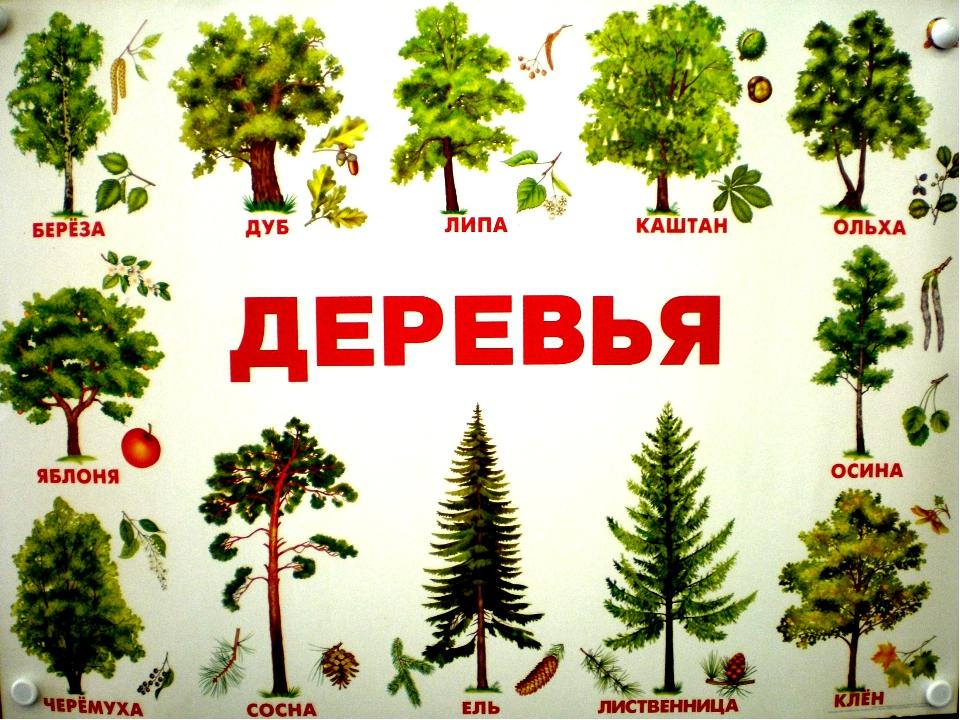 всего этому картинки деревьев с названиями и цветами для отдыха, которые