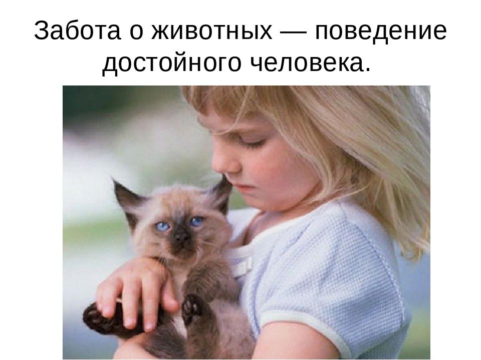 Забота о животных — поведение достойного человека.