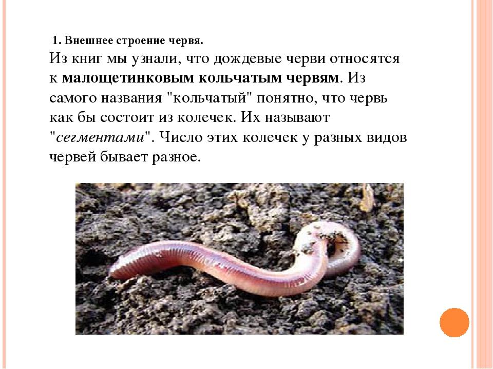 дождевой червь для детей