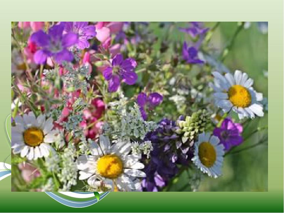 Букет полевых цветов без смс