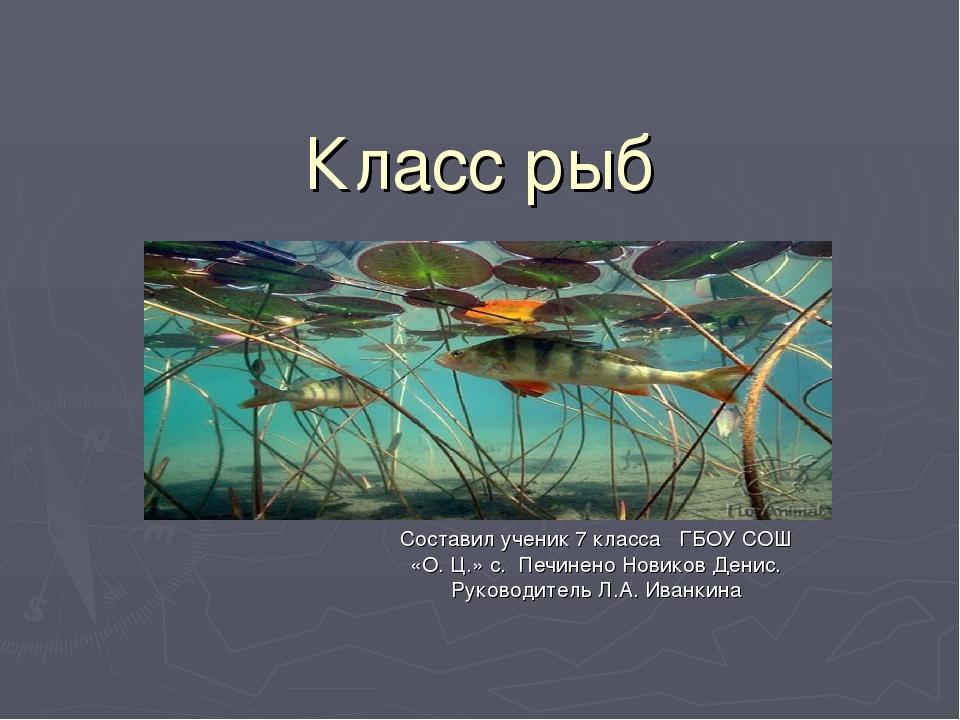 Класс рыб Составил ученик 7 класса ГБОУ СОШ «О. Ц.» с. Печинено Новиков Денис...