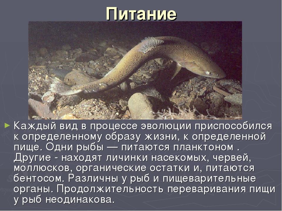 Питание Каждый вид в процессе эволюции приспособился к определенному образу ж...