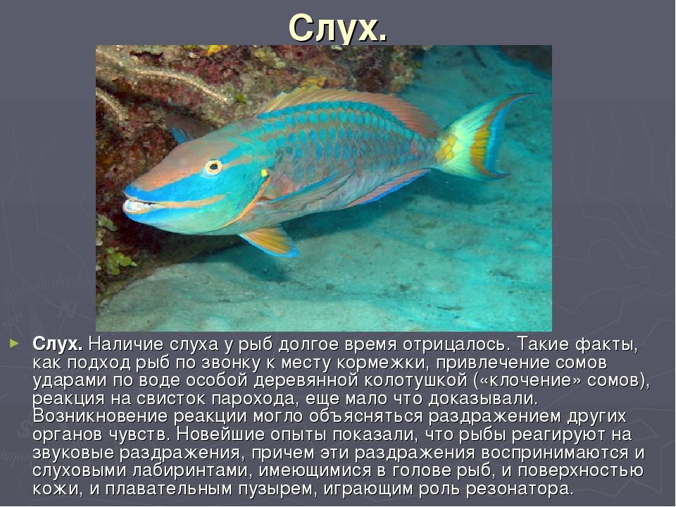 Слух. Слух. Наличие слуха у рыб долгое время отрицалось. Такие факты, как под...