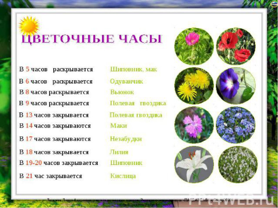 Современные цветочные часы