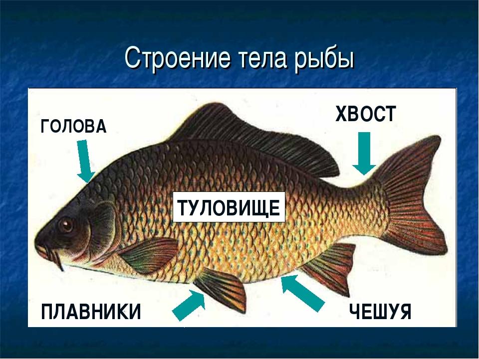 понадобиться из чего состоит рыба схема картинки цена быстровозводимые