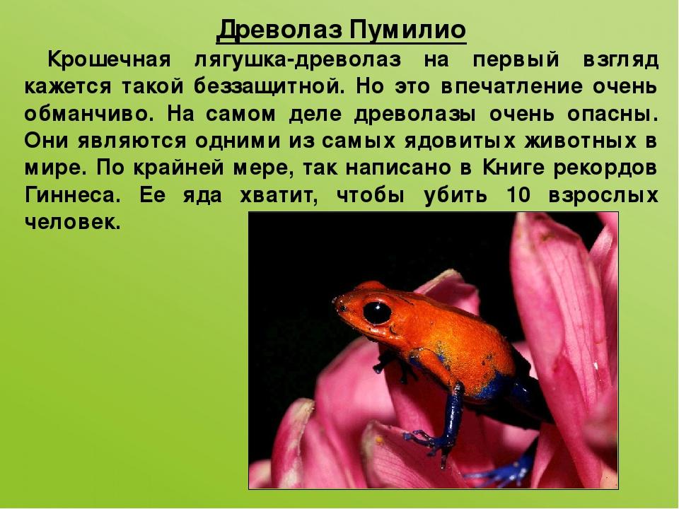 Древолаз Пумилио Крошечная лягушка-древолаз на первый взгляд кажется такой бе...