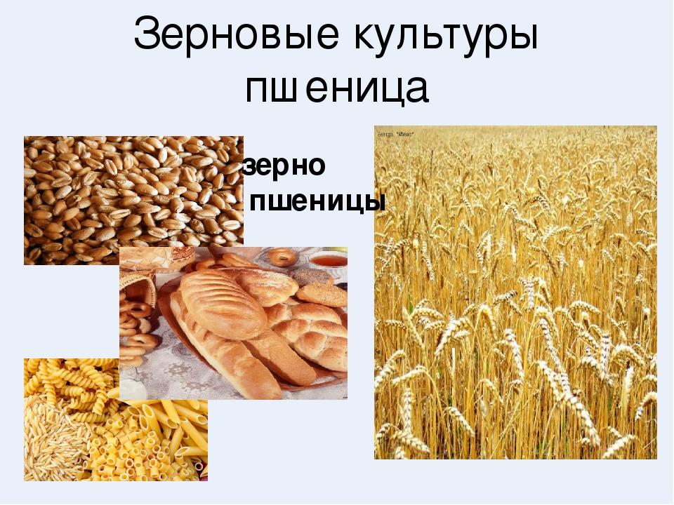 зерновые культуры картинки с названием современный дизайн