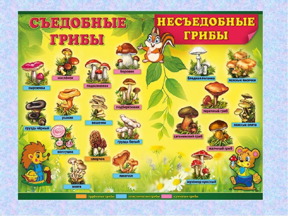 Картинки съедобные и несъедобные грибы с названиями, оригами