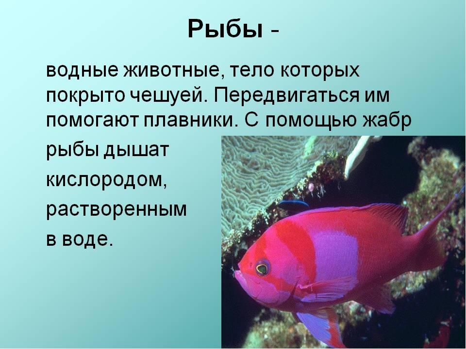 реферат на тему рыбы с картинками стрелки подойдут