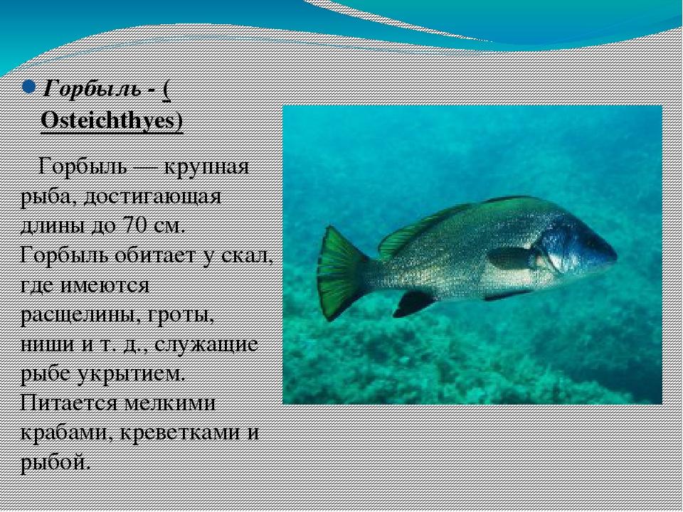 покажи картинки рыбы которые водятся в черном море какое жилье