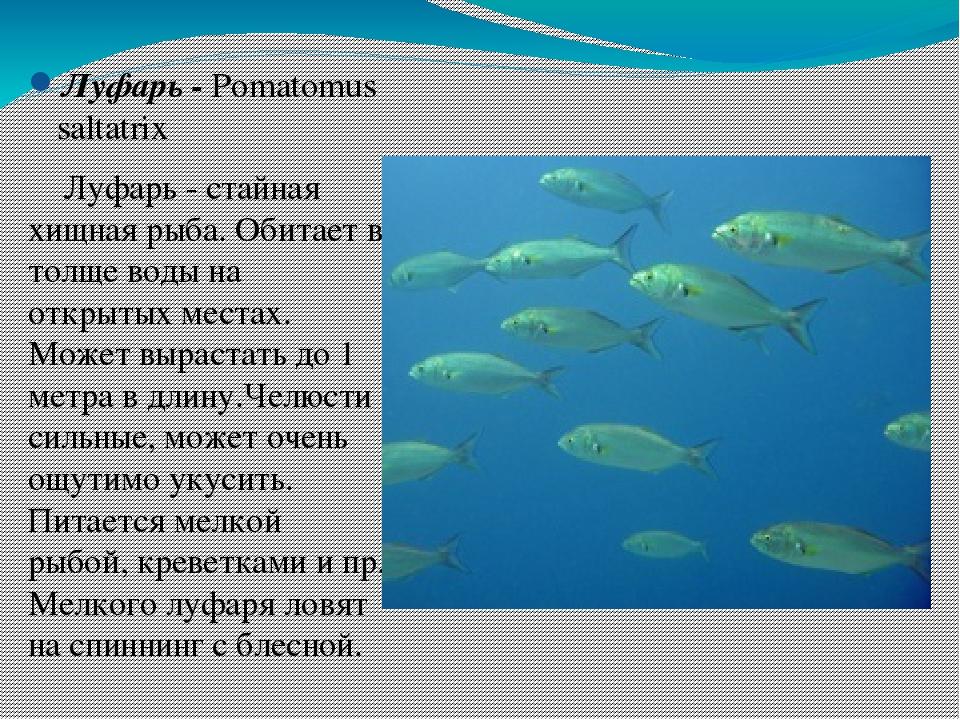 покажи картинки рыбы которые водятся в черном море привыкает