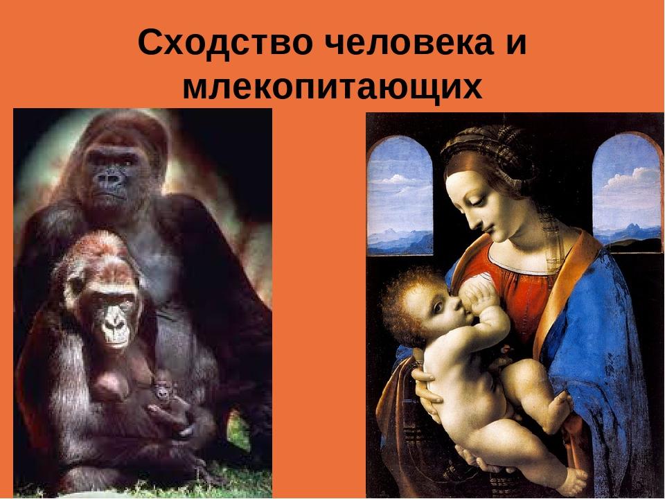 Сходство человека и млекопитающих