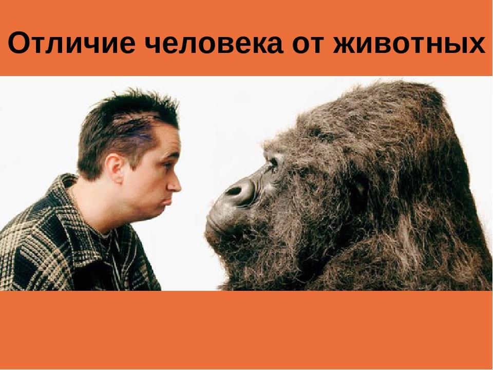 Отличие человека от животных