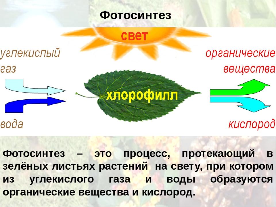 происходит ли фотосинтез при искусственном свете фото