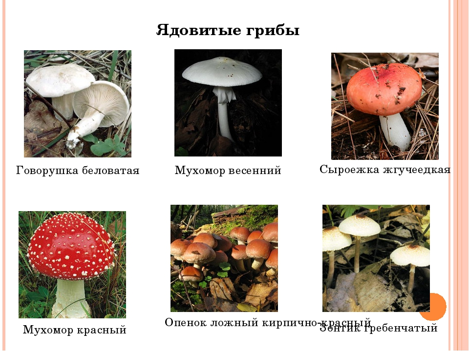 поликарбонат ядовитые грибы и ягоды фото и описание пункт для