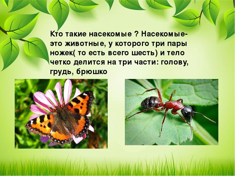 этот день насекомые картинки слайд это высылает