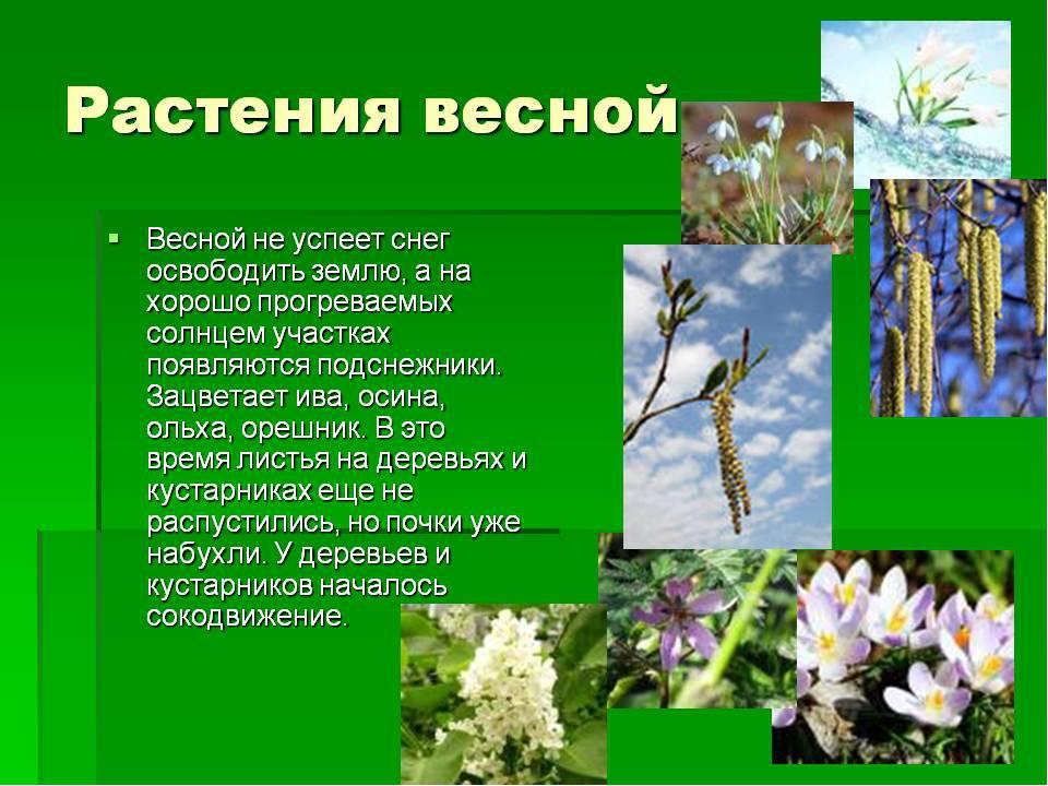 Доклад на тему сезонные явления в жизни растений 6895