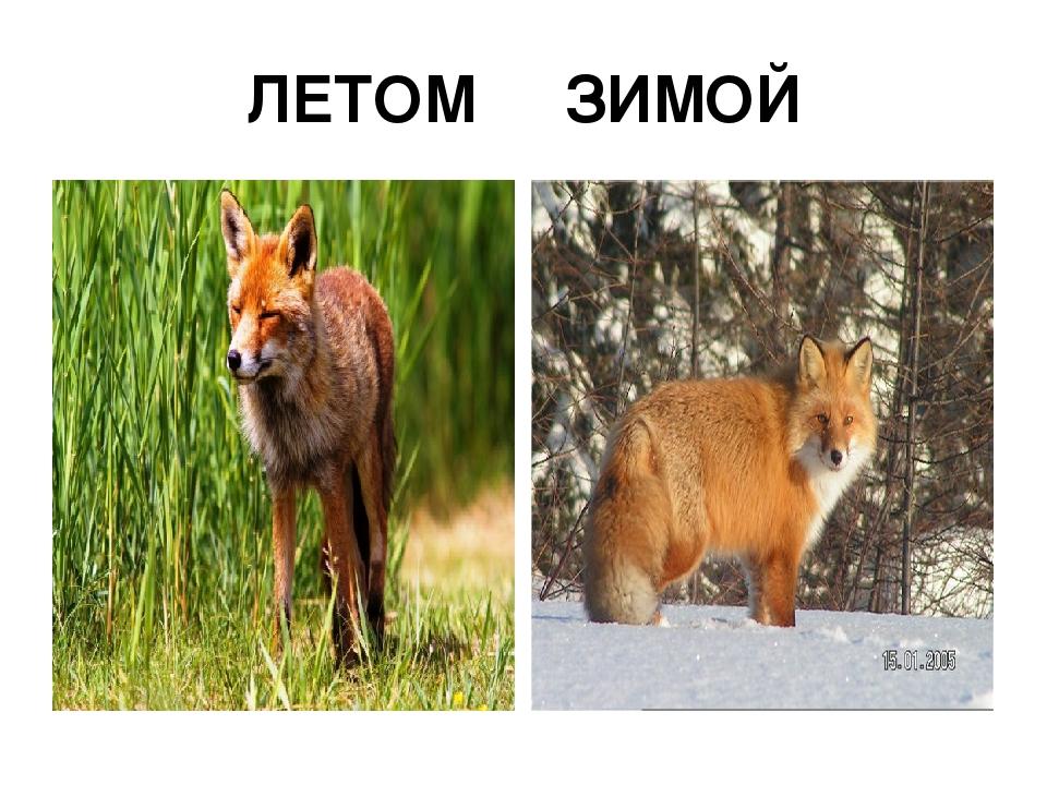 ЛЕТОМ ЗИМОЙ