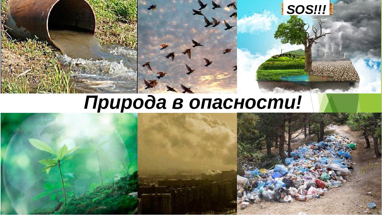 Картинки с надписями про экологию