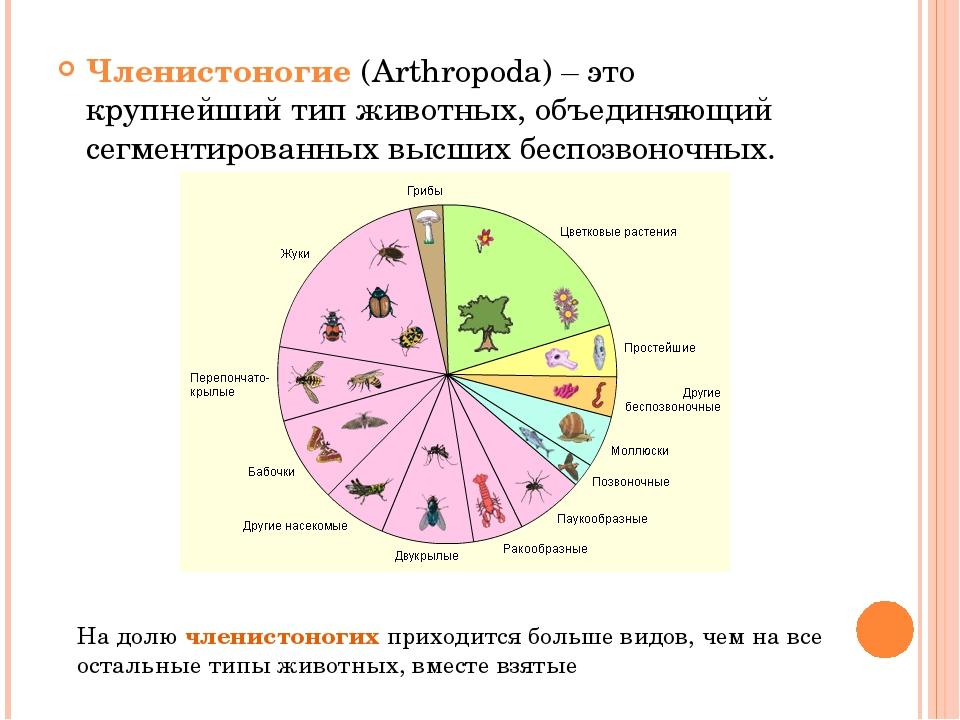 Членистоногие (Arthropoda) – это крупнейший тип животных, объединяющий сегмен...